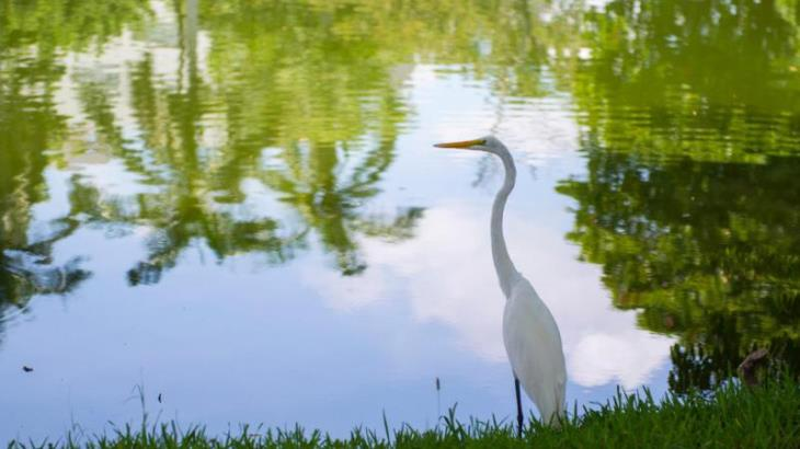 Imagen del Día: Las garzas, aves distintivas de nuestras lagunas y sus paisajes