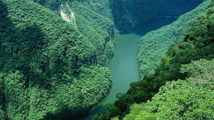 Rechaza el Presidente que su gobierno tenga intención de afectar la Selva Lacandona