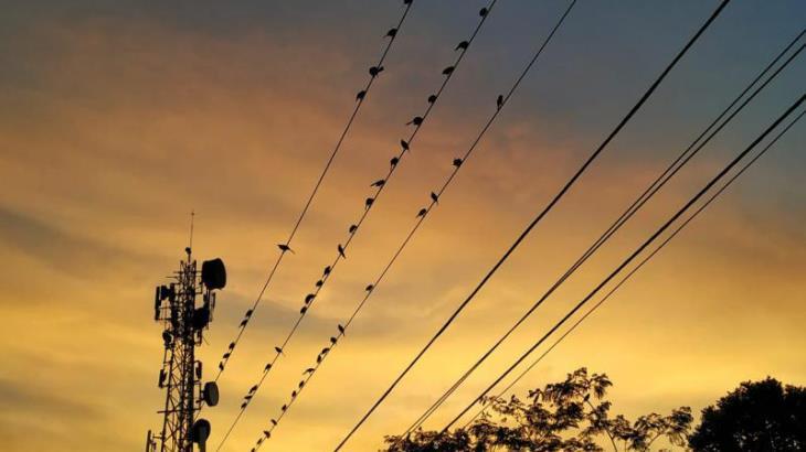 Imagen del Día: Tendedero de aves al amanecer