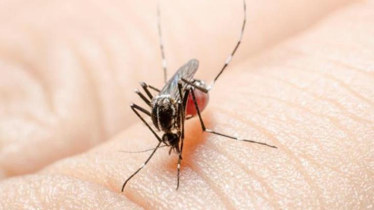 Tabasco, foco rojo por alta tasa de dengue, según SINAVE