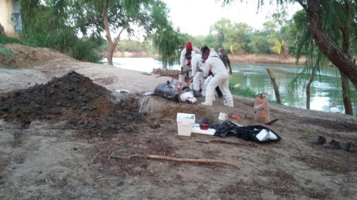 Aparece otro manatí muerto en el Grijalva