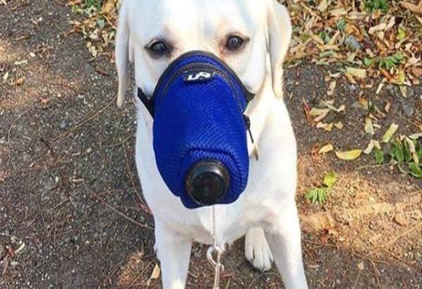 Ofertan mascarillas contra el coronavirus... para perritos