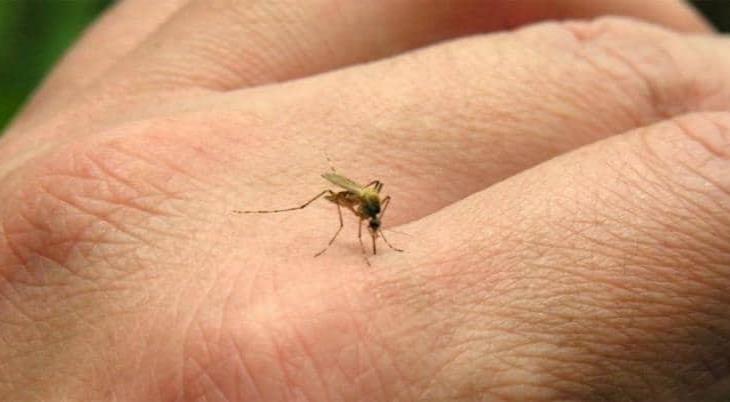 Reportan muerte de paciente enfermo de COVID y dengue en Jalisco
