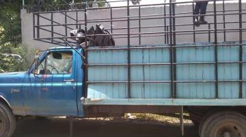 Recuperan dos camionetas reportadas como robadas