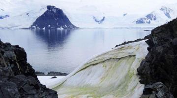 """La Antártida se pinta de """"nieve verde"""" por cambio climático"""