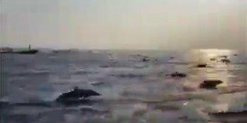 Cientos de delfines se dejan ver en costas de Oaxaca... ante ausencia de embarcaciones por contingencia