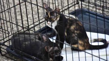 Acogen a gatos abandonados y los dan en adopción a través de Facebook