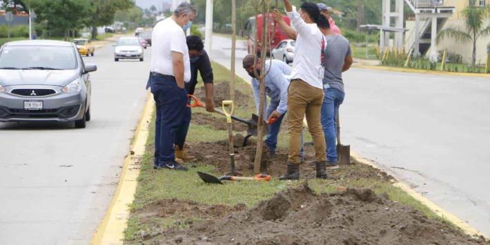 Planta Ayuntamiento de Centro árboles de macuilíes, guayacán y framboyán, en boulevard Bicentenario
