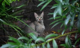 FOTO GALERÍA: Hoy es el Día Internacional del Gato, un buen pretexto para adoptar un felino