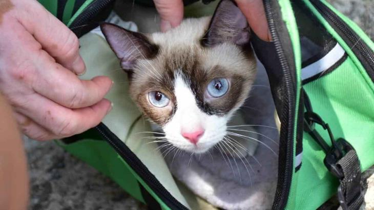 Acuden de manera responsable a vacunar a sus perros y gatos