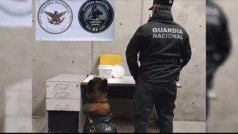 Asegura Guardia Nacional 4 kilos de metanfetaminas ocultos en crema de coco, en aeropuerto de Querétaro