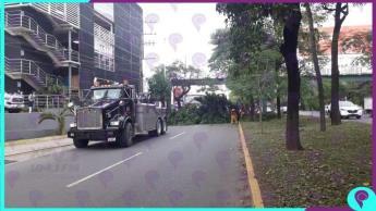 Choca tráiler con árbol y parada del transporte público en Ruiz Cortines