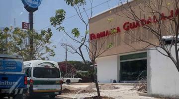 Piden a autoridades informar quién taló árboles en la avenida Quintín Arauz