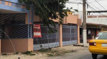 Colapsa pino sobre cables de alta tensión en Atasta; acusan que CFE no responde al llamado