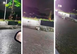 Avistan cocodrilo sobre la avenida Paseo Tabasco