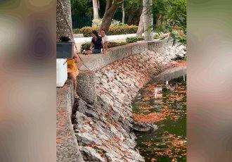 Captan en video a mujer alimentando a cocodrilo en la laguna de Las Ilusiones