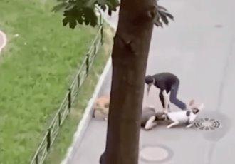 En Rusia, hombre protege a su mascota de ataque de dos perros, lo cubre con su cuerpo