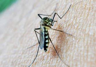 Usará BioNTech tecnología de ARN mensajero para desarrollar vacuna contra la malaria
