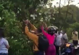 """""""Sorprende"""" en Cali, Colombia, árbol con billetes"""